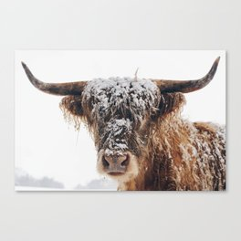 Snow Covered Highland Cow Canvas Print