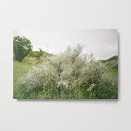Silver Leaf Sagebrush // North Dakota, Theodore Roosevelt National Park Metal Print
