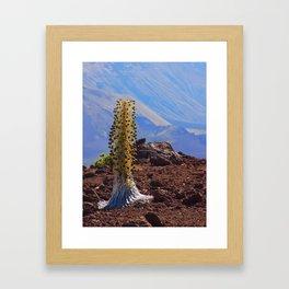Scenic Silversword Framed Art Print
