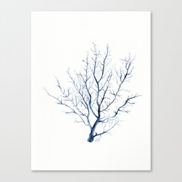Black coral sea fan Canvas Print