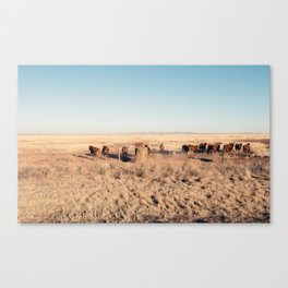 West Texas Stampede Canvas Print