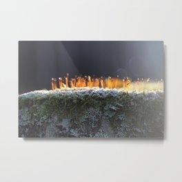 glowing moss Metal Print
