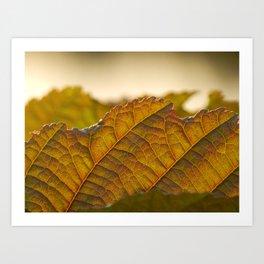Autumn leave Art Print