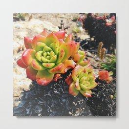 Coastal Succulents Metal Print
