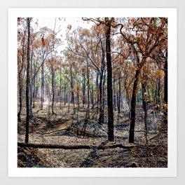 Fire damaged forest Art Print