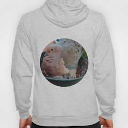 Baby Bird Peeking out at the World Hoody