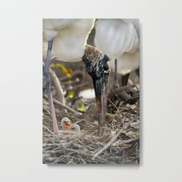 Wood Stork and her Babies Metal Print