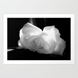 Black & White Rose Art Print