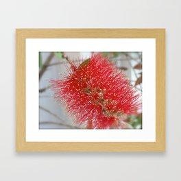Exotic Beauty Framed Art Print