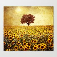 sunflowers Canvas Prints featuring lone tree & sunflowers field by Viviana Gonzalez