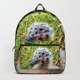 California Gull Chick Backpack