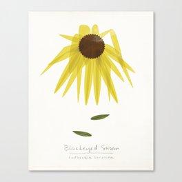 Blackeyed Susan Modern Botanical Canvas Print