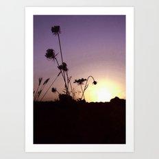 Wildflowers Sunset Art Print