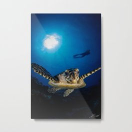 Hawksbill turtle and diver in Palau Metal Print