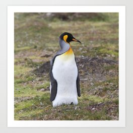 King Pinguin Art Print