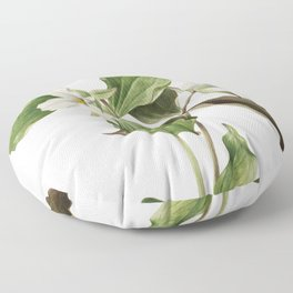 Large White Trillium (Trillium grandiflorum) (1923) by Mary Vaux Walcott Floor Pillow
