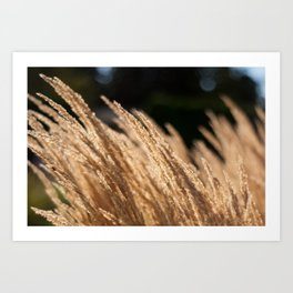 Blowing in the Wind Art Print