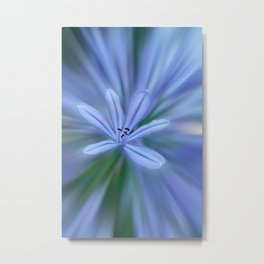 Agapanthus flower in the garden Metal Print
