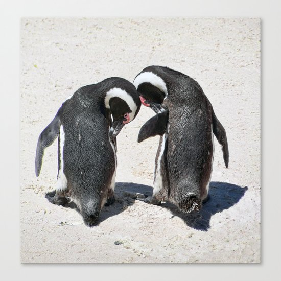 Penguins of Boulder Beach Canvas Print