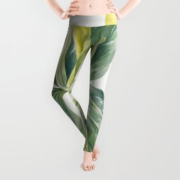 Wake-Robin (Trillium underwoodii) (1937) by Mary Vaux Walcott Leggings