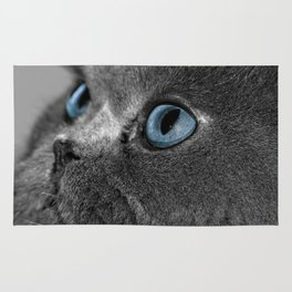 Grey Persian Cat with Blue Eyes Rug