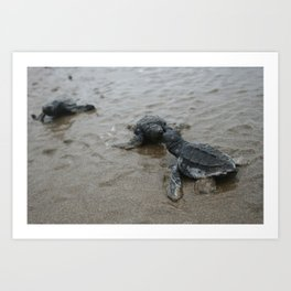baby sea turtle kisses Art Print