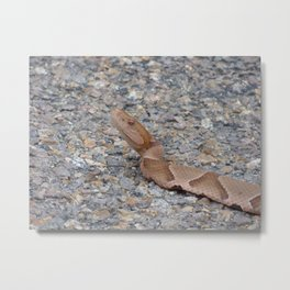 copperhead 2015 Metal Print