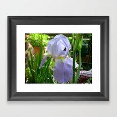 Iris w/Green Framed Art Print