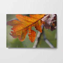 Change in Seasons (Fall Leaves) Metal Print