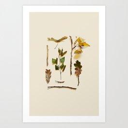 COMPOSIZIONE FOGLIE IV Art Print