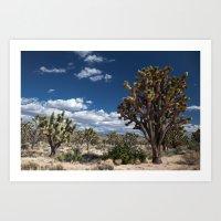 Joshua Trees in Mojave Desert Art Print