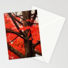 Red Maple Tree - 2013 Stationery Cards