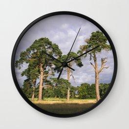 Evening light on Scots Pine trees (Pinus sylvestris). Norfolk, UK Wall Clock