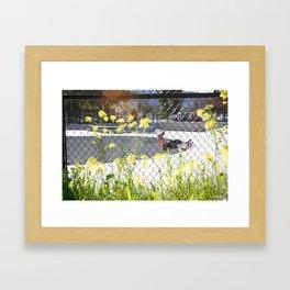 Ty Olsen. Frontside 5-0  Framed Art Print