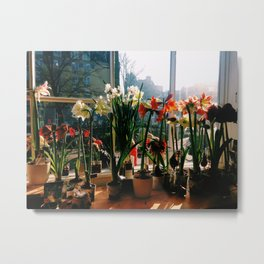 Amsterdam Tulips Metal Print