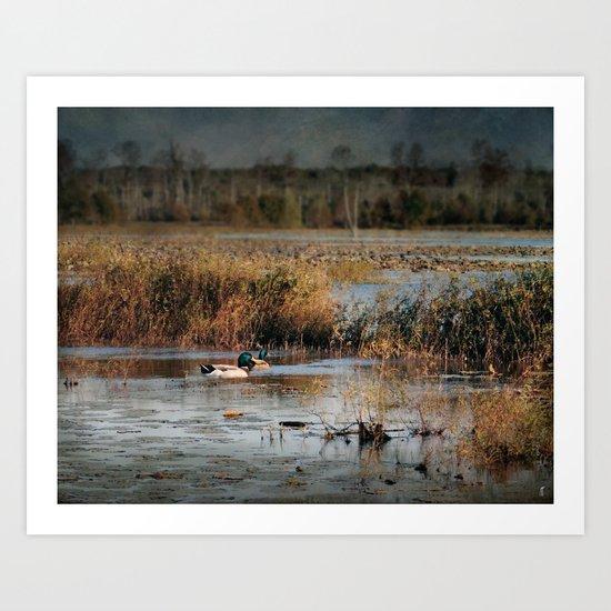 Mallards in the Swamp Art Print