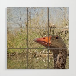 Close up portrait of Greylag goose Wood Wall Art