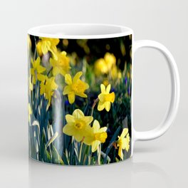 DAFFODILS IN THE LATE SPRING AFTERNOON LIGHT Coffee Mug