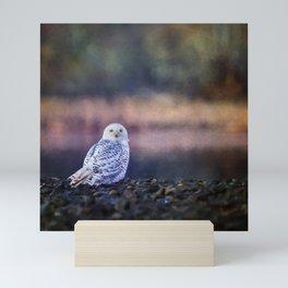 Snowy Owl squared Mini Art Print