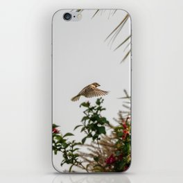Flying Sparrow Bird female caught in motion flying iPhone Skin