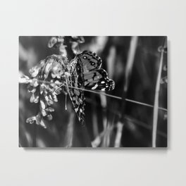 American Lady Butterfly in Black and White Metal Print