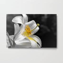 Lily flower covered by raindrops Metal Print