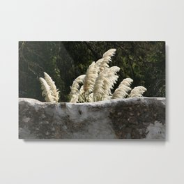 Flowering Pampas Grass Plumes Metal Print