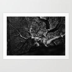 Tree B&W Art Print