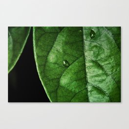 Green With Leaf Canvas Print