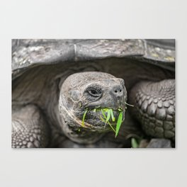 Do I have something in my teeth? Canvas Print