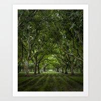 Orchard Art Print