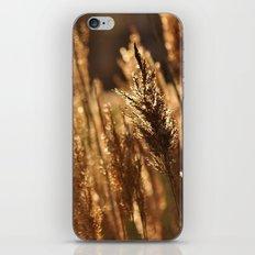 Golden Sun iPhone & iPod Skin