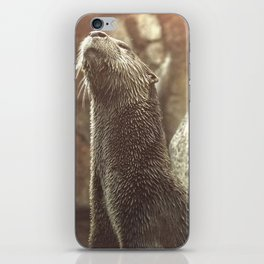 River Otter with Head Stretched Upward iPhone Skin