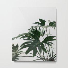 Botanical / Leaf Metal Print